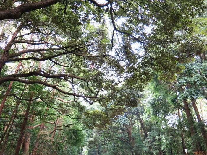 Đi bộ một quãng từ Harajuku station, bạn sẽ bắt gặp một khu rừng nhỏ, nơi dẫn đến điện Meiji