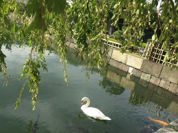 Hồ nước trong công viên bên ngoài cung điện hoàng gia (không được phép vào T__T)