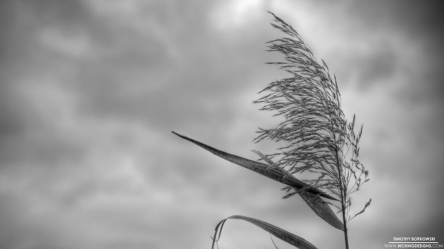 weed-in-the-wind-2-12-2013_hd-720p-1024x576